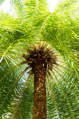 palm tree in garden.
