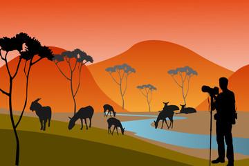 The african safari