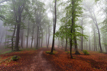 Beginning of autumn in the forest during a foggy day