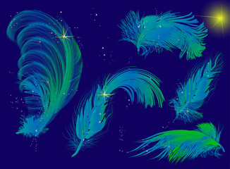 composition with five blue feathers