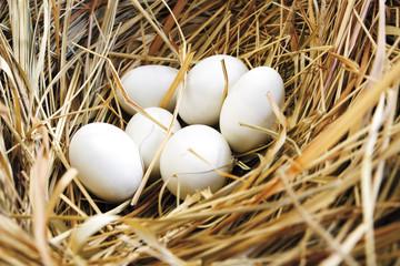 Nest mit Eiern, Nahaufnahme