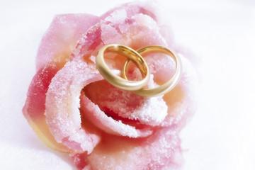 Hochzeitsringe auf rosa Rose