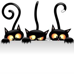 fototapeta czarne koty