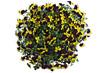 Viola cornuta, erhöhte Ansicht