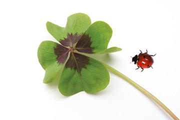 Marienkäfer und vierblättriges Kleeblatt