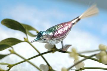 Glasvogel auf Mistel, Nahaufnahme