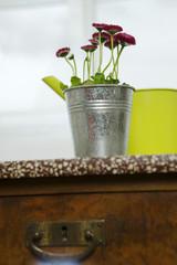 Rote Gänseblümchen und gelbe Gießkanne, Stilleben