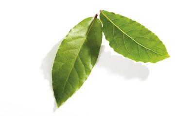 Indonesisches Lorbeerblatt, waplers, syzygium polyanthum, Eugenia polyantha