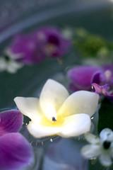 Brennende Kerze und Blüten schwimmen in Schüssel