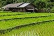 Farm and terrace rice field