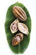 Kakaopflanze, Schale und Bohnen auf Blatt, erhöhte Ansicht