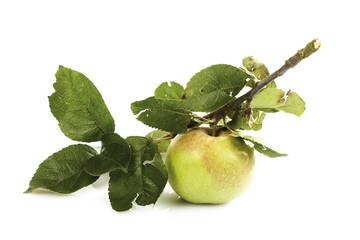 Bio Apfel auf einem Ast
