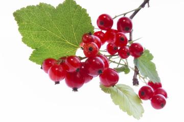 Zweig von roten Johannisbeeren, Freisteller, weißer Hintergrund
