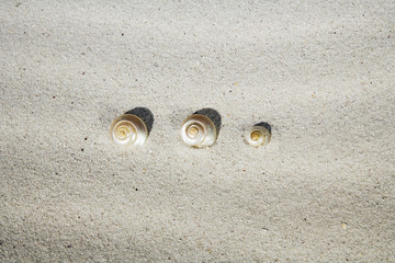 Schneckenhäuser im Sand