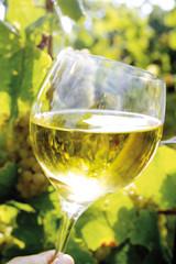 Menschliche Hand, die ein Glas Wein hält, Nahaufnahme