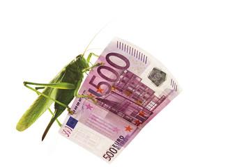 Grashüpfer sitzt auf 500 Euro note, Nahaufnahme