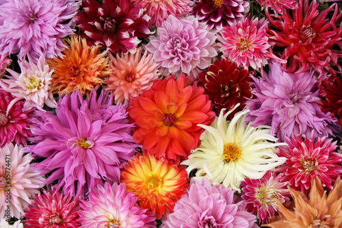 Deurstickers Dahlia autumn bouquet dahlia.