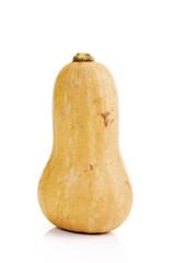 Butternuss-Kürbis, Nahaufnahme