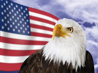 Weißkopfseeadler vor US-Flagge, Nahaufnahme