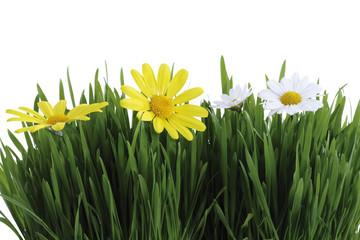 Grünes Gras und weiße und gelbe Margeriten