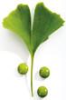 Ginkgo Blätter und Pillen, Nahaufnahme