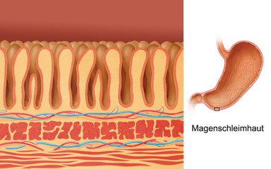 Magenschleimhaut - Nahansicht