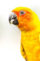 parrot in nightsafari chiangmai Thailand