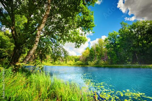 czysci-jezioro-w-zielonym-wiosna-lata-lesie