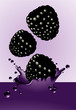 Blackberry splash. Vector.