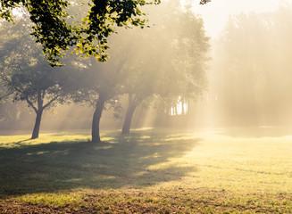 Morning sunlight falls .