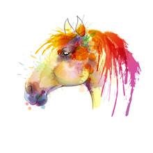 Głowa konia akwarela
