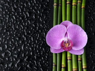 pink orchid and thin bamboo grove on wet background