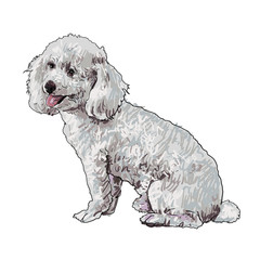 The vector of shihtzu
