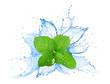 Leinwandbild Motiv Mint leafs water splash