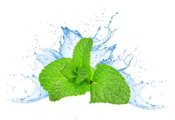 Mint leafs water splash