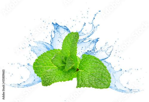 Mint leafs water splash - 55809663