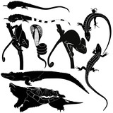 amphibians crocodile chameleon iguana lizard turtle cobra poster