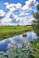 Paesaggio olandese