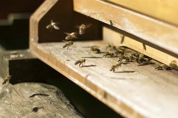 Honigbienen vor dem Einflugloch