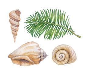 Watercolor illustrations of shells