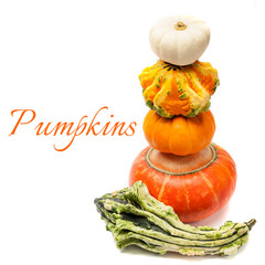 Assorted pumpkins on a white background