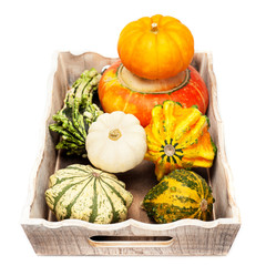Pumpkins on a wooden tray on a white background