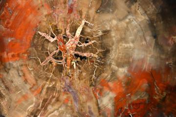Petrified tree background