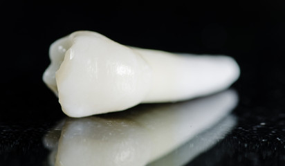 maxillary premolar - extracted teeth