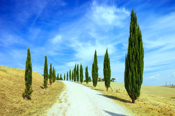 Tuscany, Cypress Trees white road rural landscape, Italy, Europe