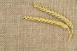 Wheat ears  on burlap with copy space
