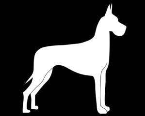 Dogge stehend weiß