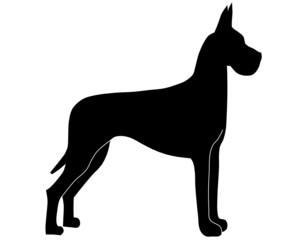 Dogge stehend schwarz