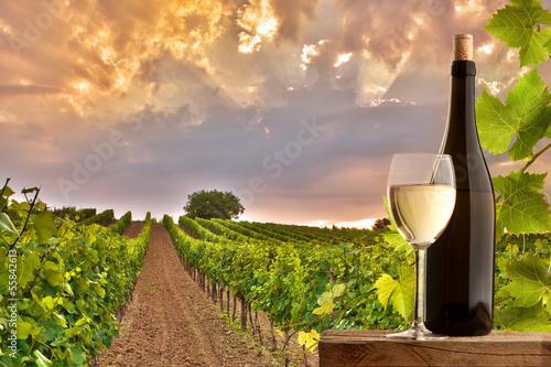 Fototapeta Evening view of the vineyards