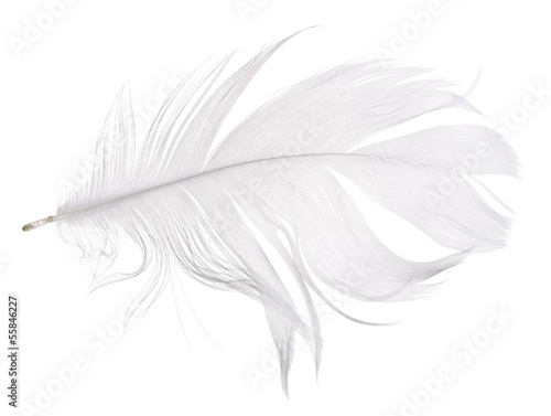 light grey goose feather isolated on white